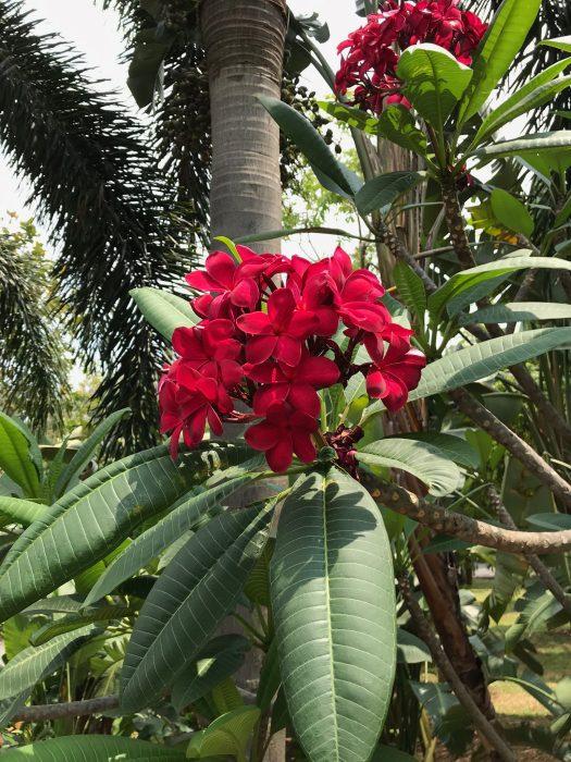 ガーデンズバイザベイの花1